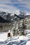 Winter mountains. Rockies in winter, near snow mass colorado Stock Photo