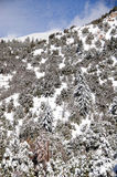 Winter mountains. Winter in the forest in the mountains Royalty Free Stock Photography