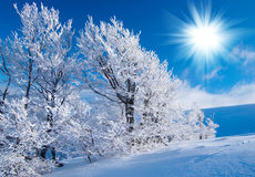Winter in the mountains. On sunny day Stock Images