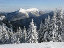 Winter in the mountains of Carpathians Stock Image