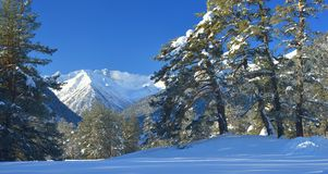 Winter in mountains royalty free stock photo