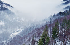 Winter mountains in fog Royalty Free Stock Photo