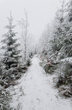 Winter in mountains on foggy overcast day Royalty Free Stock Photography