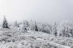 Winter in mountains on foggy overcast day Stock Photography