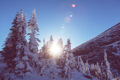 Winter in mountains Royalty Free Stock Images