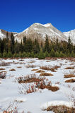 Winter mountains and meadows Stock Photography