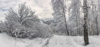 Winter in the mountains. Royalty Free Stock Photo