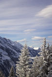 Winter in the mountains, snow-covered fir Stock Images