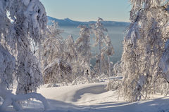 Winter in the mountains. Winter snow-covered trees in the Ural mountains Royalty Free Stock Photo