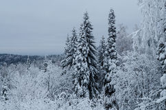 Winter in the mountains of the Southern Urals Stock Image