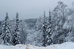 Winter in the mountains of the Southern Urals Royalty Free Stock Photography