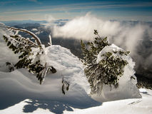 Winter on Mt. Bachelor. Snow buries a few trees on top of Mt. Bachelor with the cascades in the background Royalty Free Stock Photo