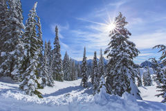Winter in Mt Rainier Park Royalty Free Stock Photos
