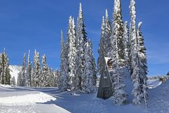 Winter in Mt Rainier Park Stock Photography