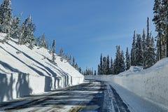 Winter in Mt Rainier Park Stock Image