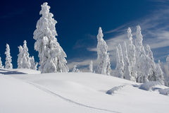 Winter on Mt Seymour Stock Images