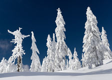 Winter on Mt Seymour Royalty Free Stock Image