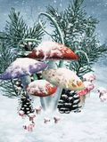Winter mushrooms Royalty Free Stock Photos