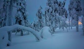Winter-Nacht in gefrorenem Wald nach Schneeblizzard Lizenzfreie Stockfotos