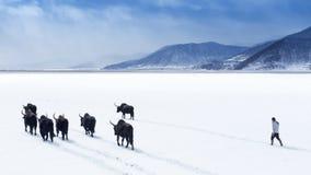 Winter Napa Lake Stock Photo