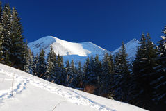 Winter in National Park of Rodnei Mountains stock images