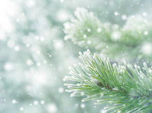 Winter natural background stock photo