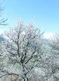 Winter natural view of winter frosty trees. Snowy winter landscape. Nature tree and winter stock photo
