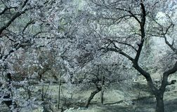 Winter natural view of winter frosty trees. Snowy winter landscape. Nature tree and winter stock images