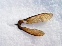 Winter nature stock image