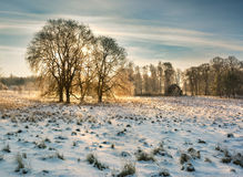 Winter nature Royalty Free Stock Photo