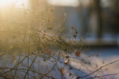 Winter nature background. Christmas holiday backdrop, Frozen tree branch Royalty Free Stock Photography