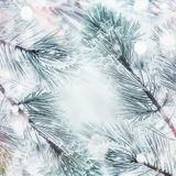 Winter nature background with frame Frozen Branches of cedars or fir with snow Royalty Free Stock Image