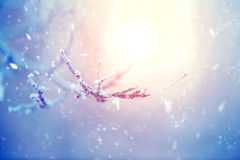 Winter nature background Royalty Free Stock Photo