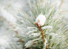 Winter nature background. Frozen flower. Winter nature background. Winter landscape. Winter scene. Frozen flower Royalty Free Stock Photos