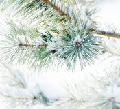 Winter nature background. Frozen flower Royalty Free Stock Image