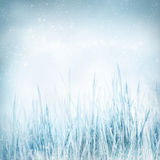 Winter  nature background with frozen grass Royalty Free Stock Photos