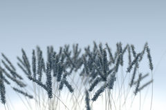 Winter nature background with frozen grass Royalty Free Stock Images