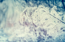 Winter nature background with Grass and twigs covered with hoar frost and snow Royalty Free Stock Photos