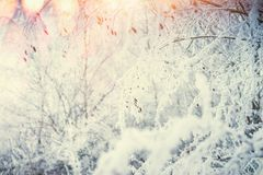 Winter nature background with snow covered plants and grasses at sun light background Stock Image