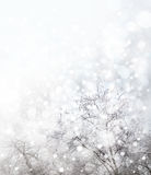 Winter  nature background. Stock Photos