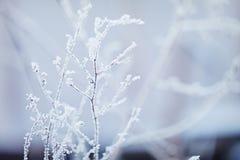 Winter nature background. Winter landscape. Winter scene. Frozen flower. Royalty Free Stock Images