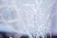Winter nature background. Winter landscape. Winter scene. Frozen flower. Stock Photos