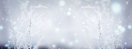 Winter nature background. Winter landscape. Winter scene. Frozen flower. Banner Stock Images