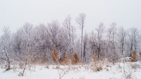 Winter nature background Stock Image