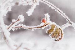 Winter nature background Royalty Free Stock Image