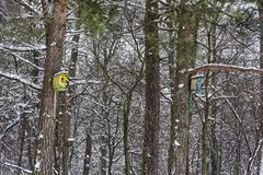 Winter nature. Birdhouses for birds in the winter forest Royalty Free Stock Photos