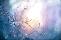 Winter nature. Christmas holiday background. Frozen tree branch closeup Stock Image