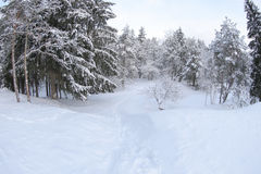 Winter in nature Royalty Free Stock Photography