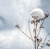 Winter Nature Details Stock Photography