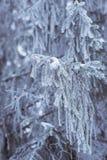 Winter nature details Stock Photo